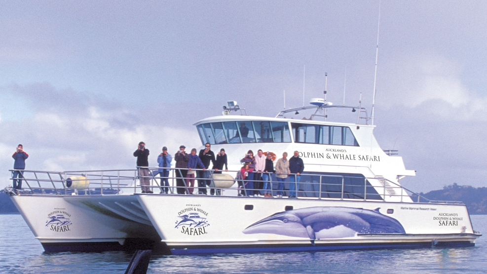Dolphin Safari Catamaran or Whale Dolphin Safari